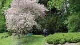 Ogród Botaniczny w Lublinie zachwyca! Zobacz zdjęcia z niedzielnego spaceru [18.05]