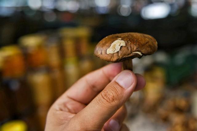 Gdzie na grzyby? Jak donoszą w sieci zapaleni grzybiarze, w lasach jest wiele grzybów. Szczęśliwcy, z wycieczki do lasu wracają z koszyczkiem pełnym grzybów. Sprawdź na następnej karcie, gdzie są grzyby
