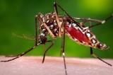 """Komary """"tną na potęgę"""". W Międzyzdrojach dziś rusza odkomarzanie"""