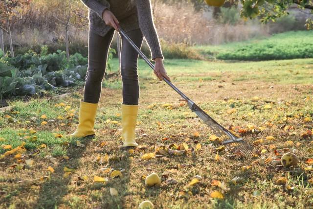W październiku warto cieszyć się jesiennym ogrodem! Ale jest też sporo pracy do zrobienia. Zobacz, o czym pamiętać w tym miesiącu.