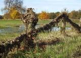 Woda w Odrze trochę opadła. Sceneria jak z horroru. Tak wygląda teren leżący tuż przy rzece w Milsku