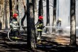 Pożar w Fordonie. Straż pożarna mówi o podpaleniu. Spłonęło 1,7 hektara lasu [zdjęcia]