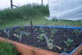 Podwyższone grządki w warzywniaku. Uprawa roślin w skrzynkach