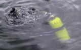 Łowił ryby na Jeziorze Lubiszewskim niedaleko Lipusza. Wypadł z łódki i utonął