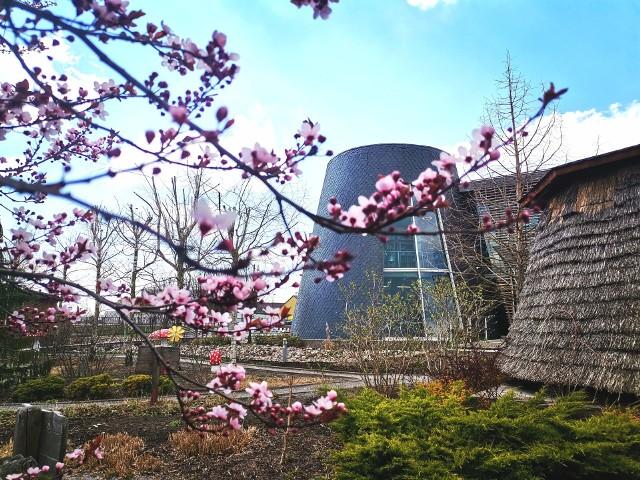 W Pacanowie już jest pięknie ale niestety Centrum będzie można odwiedzać dopiero w końcu maja