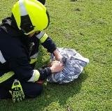 Gmina Nieborów. Pies tonął w studni z pomocą przyszedł grzybiarz i straż pożarna