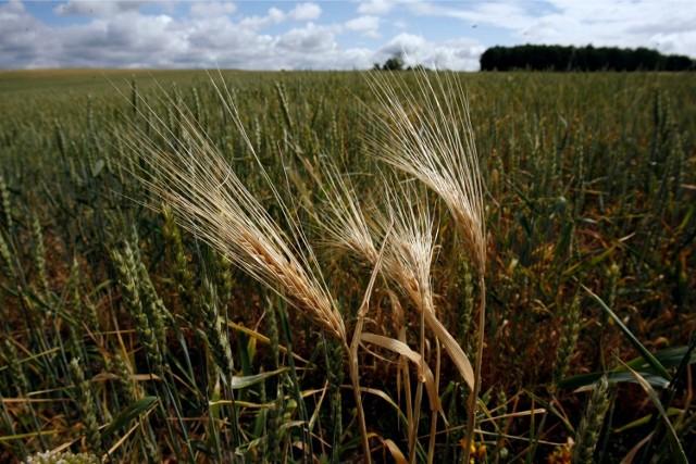 Trwa szacowanie strat spowodowanych przez suszę w Zagłębiu Miedziowym