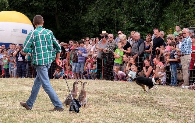 Pokaz pracy psów pasterskich