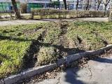 Pijany 19-latek jeździł mercedesem po trawnikach w Zielonej Górze