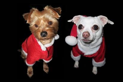 4c569d05653c6 Ubranka dla psów. Jakie są rodzaje? Jak uszyć ubranko dla psa? Jakie ...