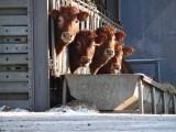 """Wchodzą do domów, gospodarstw. """"To nie czas na kontrole"""", wskazuje samorząd rolniczy"""