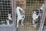 Ponad 250 osób chce adoptować psy i koty z łódzkiego schroniska, jeśli to zrobią, placówka, w której mieszka 340 psów opustoszeje