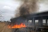 Wrocław: Znów płoną trawy przy AOW. Uwaga na gęsty dym (ZDJĘCIA)