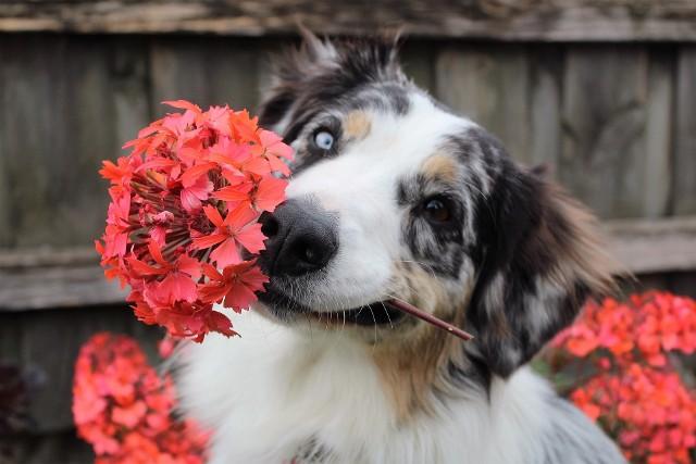Zobacz jakie rośliny są trujące dla psów