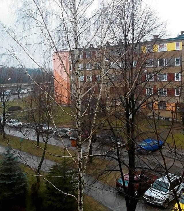 Tak do niedawna wyglądały drzewa przy bloku nr 5 na ul. Reja. Mieszkańcom w ogóle nie przeszkadzały rozłożyste gałęzie