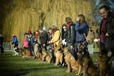Owczarki belgijskie opanowały Gdynię. Trójmiejski Zlot Owczarków Belgijskich. Zobaczcie zdjęcia tych pięknych psów
