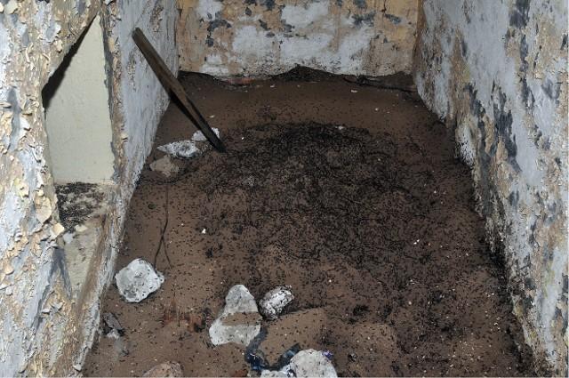 Fotografię wykonano w listopadzie 2015 r. Widać na niej usypany z ziemi kopiec mrówek. Znajduje się on w jednym z pomieszczeń podziemnej bazy atomowej w Templewie.