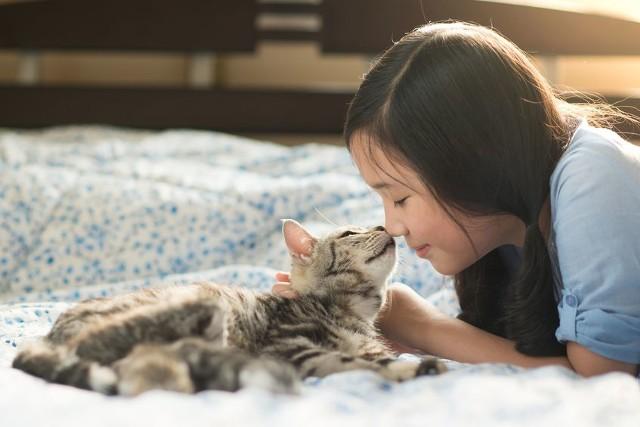 Koty są zwierzętami domowymi, które według ostatnio opublikowanych badań mogą przywiązać się do człowieka równie mocno co psy.