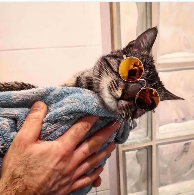 Dziś dzień kota, kilka dni temu poprosiliśmy naszych czytelników o przesłanie zdjęć ich ulubieńców. Wybraliśmy te, które na Facebooku zyskały największą popularność! Zobacz galerie kotów, znajdź swojego faworyta. Na zdjęciu: Don Gustaw;nfb]Zobacz na kolejnych slajdach zdjęcia kotów naszych czytelników, posługuj się myszką, klawiszami strzałek na klawiaturze lub gestem[/b]
