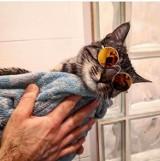 Dzień kota 2020 - zobacz zdjęcia pięknych wrocławskich kotów