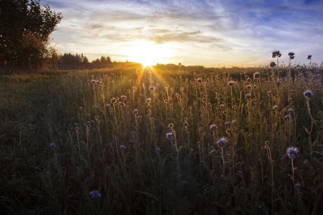 działka rolne Działki rolne to doskonała inwestycja. Zwłaszcza, kiedy uda się zmienić przeznaczenie gruntu.