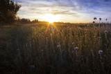 Grunty rolne drożeją od ponad 7 lat
