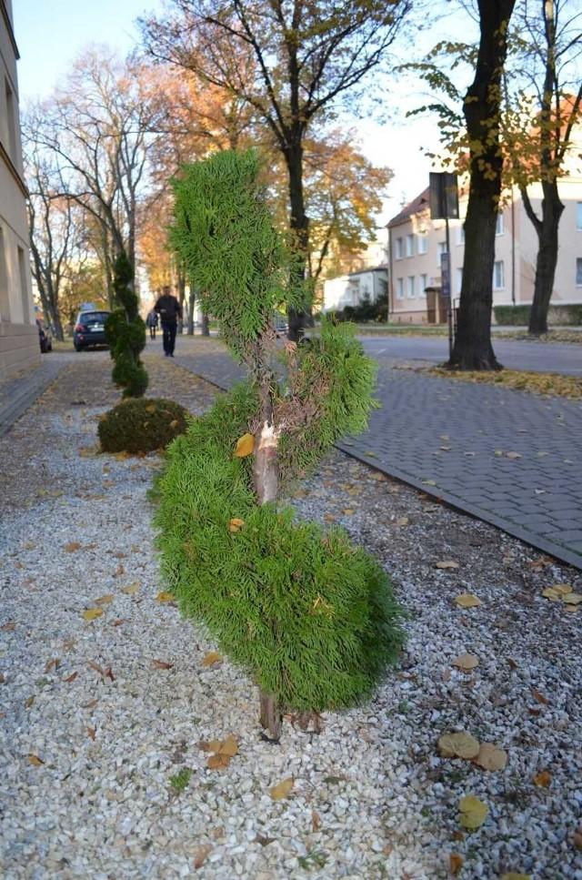 Złamana drzewko przed budynkiem sanatorium Solanki Medical SPA
