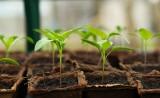 Nasiona, cebule i sadzonki ze sklepu – jak rozpoznać ich jakość