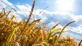 Szacowanie suszy 2021 ma przyspieszyć. Jeszcze można złożyć wniosek