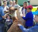Uczniowie szkół specjalnych w Adamowie po raz kolejny spotkali się z sympatycznymi alpakami
