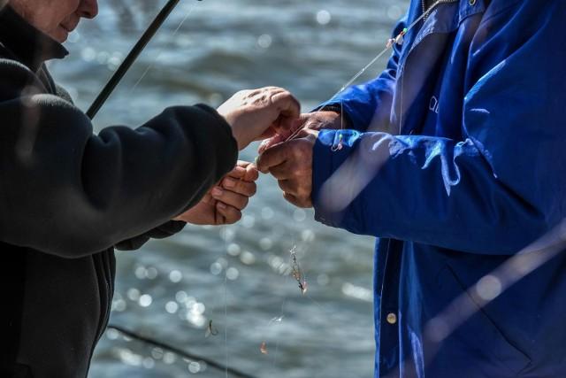 """Według badań brytyjskich """"koks"""" w ściekach na tyle spodobał się rybom, że szczupaki i inne płocie wybierają miejsca przy rurach kanalizacyjnych"""