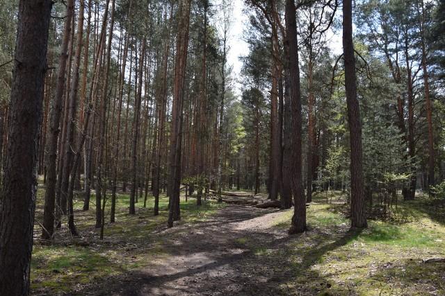 Tak wygląda las przy szpitalu w Nowej Soli. Działkę wielkości 1,5 hektara kupuje od miasta powiat. Miasto sprzedaje, bo zamieniło się z lasami na inną działkę, po to by tą można było przeznaczyć częściowo na parking.