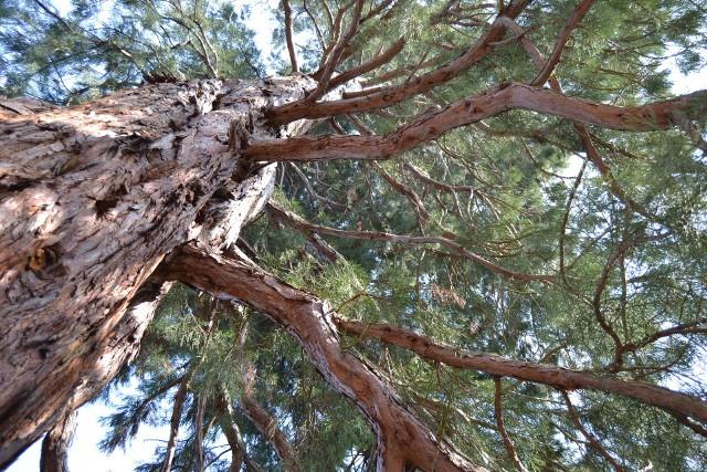 Sprawdź, kiedy pozwolenie na wycinkę drzew nie jest wymaganeKiedy pozwolenie na wycinkę drzew nie jest wymagane