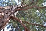 Kiedy pozwolenie na wycinkę drzew nie jest wymagane