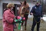 Koń straży miejskiej na emeryturze  (galeria zdjęć)