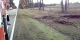 Wichury w Podlaskiem: Wiatr łamał drzewa. Strażacy mieli mnóstwo roboty [ZDJĘCIA]