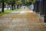 Liście zalegają na chodnikach i ścieżkach rowerowych w Lublinie