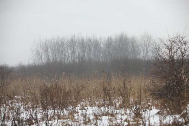 Południowe rejony Klinów to rozległy teren, w większości wciąż jeszcze zielony. Jeśli nie powstanie tam użytek ekologiczny, to teren będzie można zabudować
