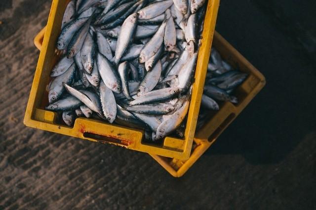 Ryby to główne źródło kwasów omega 3. W rybach znajdują się w także witaminy A, D, E oraz z grupy B. Są bogate w białko i składniki mineralne – jod, selen i żelazo, dlatego warto sięgać po ryby 2-3 razy w tygodniu. Zobaczcie co dzieje się gdy jemy ryby, kto powinien je jeść, a kto ich unikać.