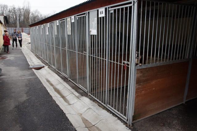 Zwierzęta z Radys trafią do schroniska w Sosnowcu. Tutaj będą miały lepszą opiekę w oczekiwaniu na nowy dom