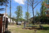 Duże drzewa pojawiły się w bielskim Parku Słowackiego