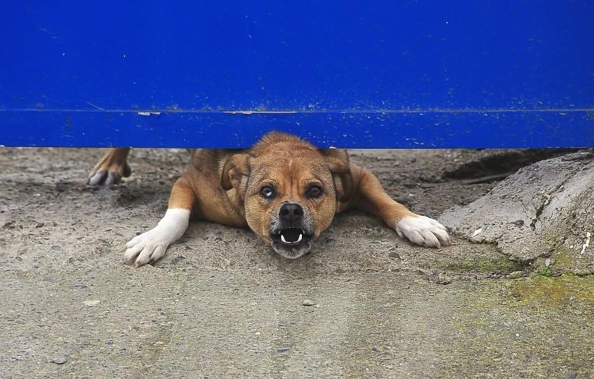 Prawo ostrzejsze dla właścicieli psów: nawet 5 tys. zł i ...