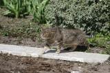 Cztery tony suchej karmy dla kotów wolnożyjących