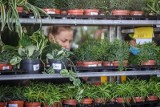 Od aloesu z Ikei po roślinne białe kruki. Powiększ domową kolekcję dzięki aplikacji Plantswapp. Zielony barter już w 28 polskich miastach