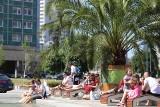 Palmy na rynku w Katowicach. Feniksy kanaryjskie wrócą na plac nad Sztuczną Rawę, ale kiedy? ZDJĘCIA