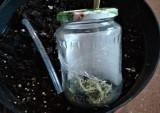 Dzielnicowi odkryli domową hodowlę marihuany na Górnej. Młody łodzianin uprawiał konopie w mieszkaniu