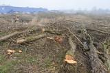 Polder Żelazna. Prawie 1,5 tysiąca drzew i krzewów w Opolu pod topór w ramach przeciwpowodziowej inwestycji [ZDJĘCIA]