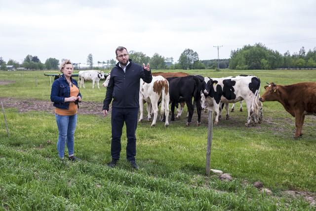 Na miejscu hodowanych jest około 30 krów starej rasy jersey ze względu na niezwykłą jakość mleka o zawartości tłuszczu nawet do 6 proc.