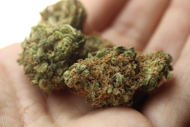 Narkotyki znaleziono w aucie