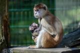 Zoo w Gdańsku budzi się z zimowego snu. Co nowego u oliwskiej menażerii? [ZDJĘCIA]
